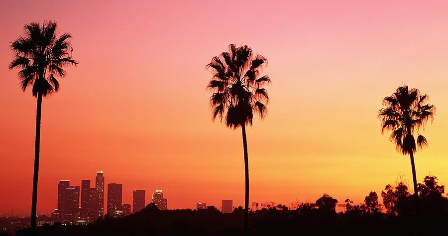 palm tree scientific name