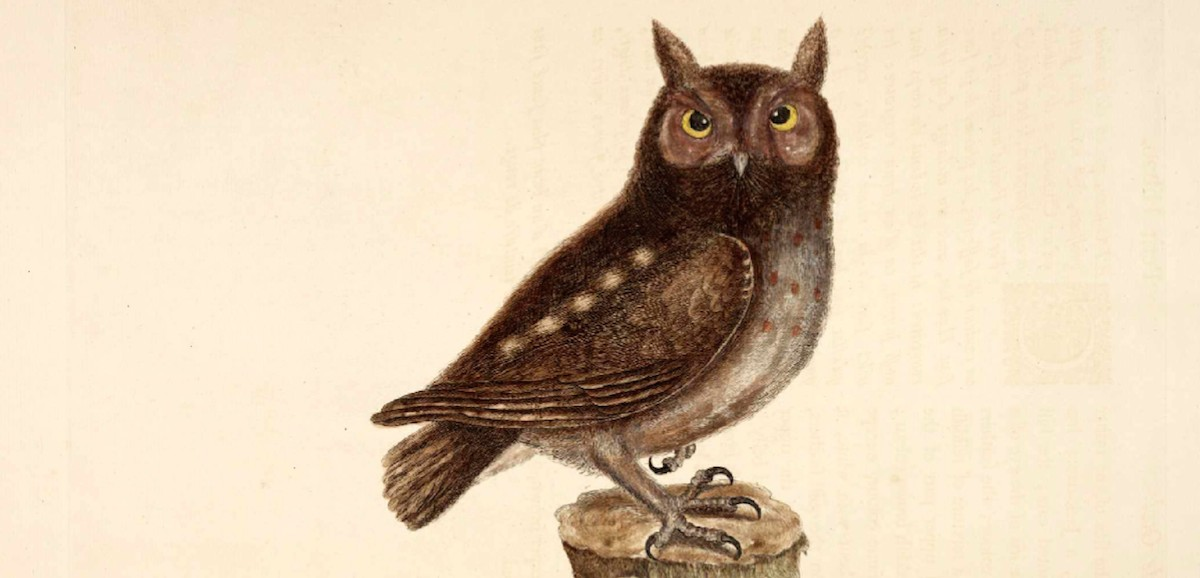 Aliens Among Us A Brief History Of The Owl Literary Hub