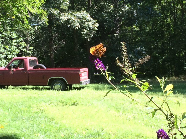 butterfly truck