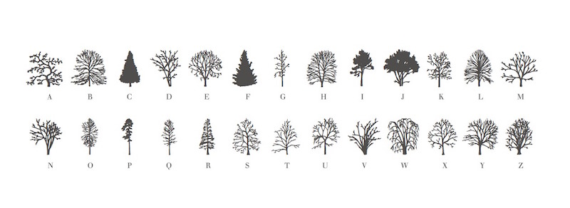 about trees 2