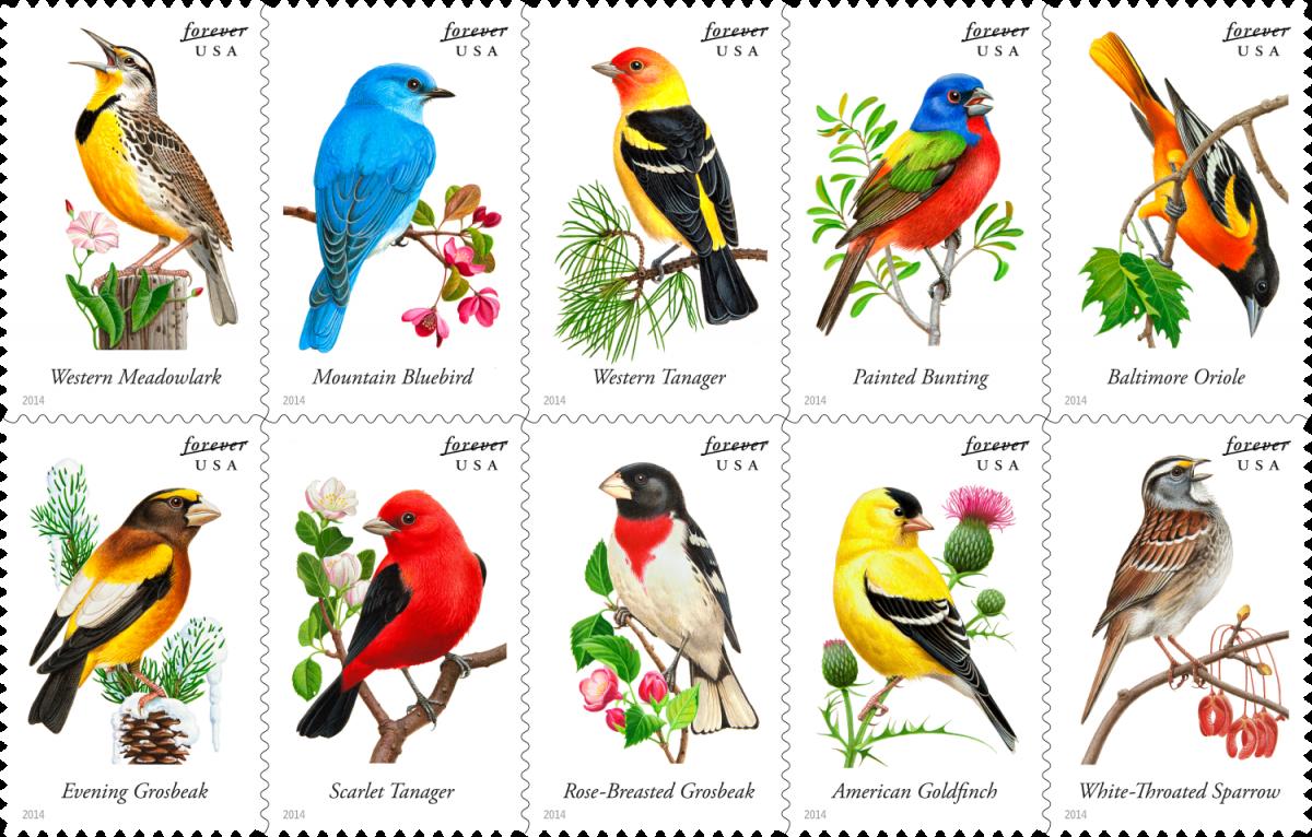 Why Do Writers Love Birding So Much? | Literary Hub