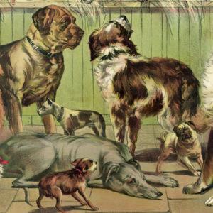 The Divinity of Dog Writing | Literary Hub