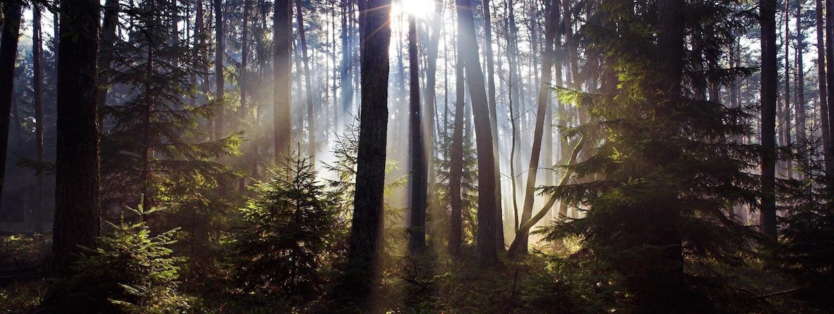 When Climate Change Comes For The Fairy Tale Forest Literary Hub