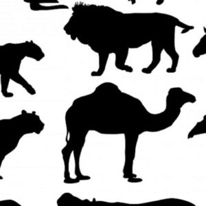 How Writing A Short Story Collection Is Like Starting Zoo This Essay Was Expanded From An Interview With The Poet Emily Warn Valerie Truebloods