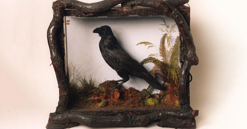 Meet the Beloved Pet Ravens of Charles Dickens