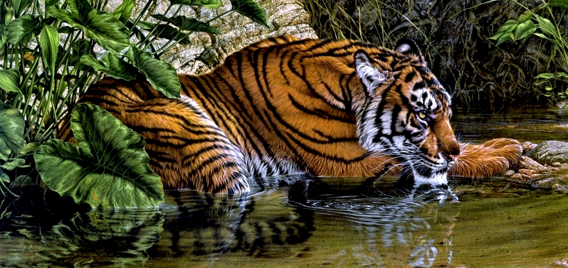 The Of A Symbol How Western Writers Exploit Tiger