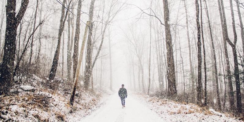 trees walking snow