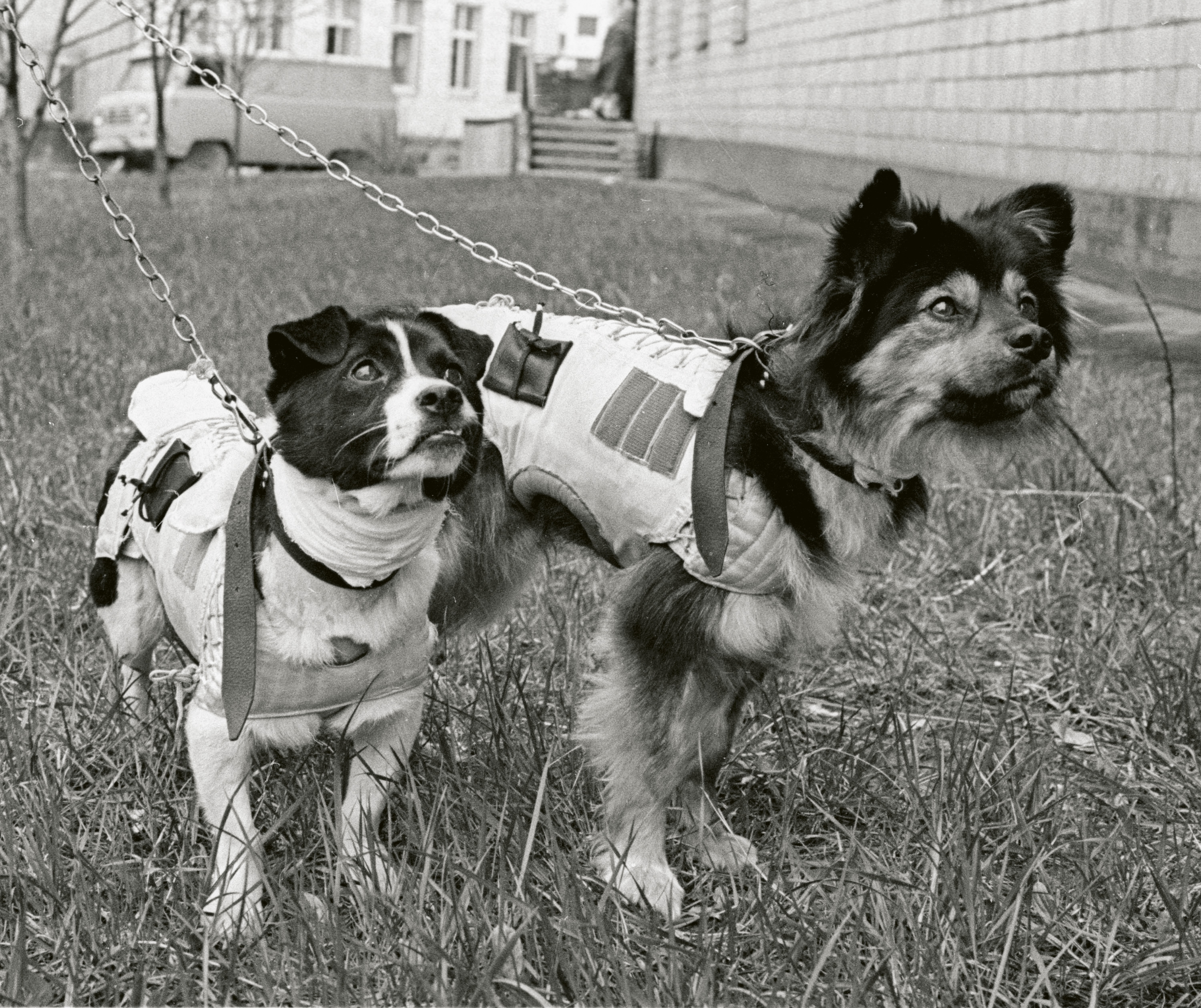 Gaze Upon These Heroic And Very Good Space Dogs Literary Hub
