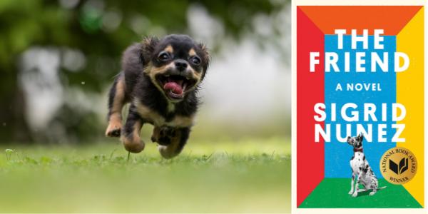Dog adoption_The Friend