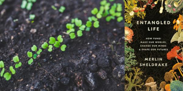 Gardening_Entangled Life