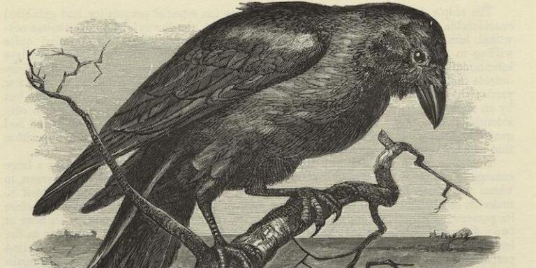 A Compendium of Literary Ravens