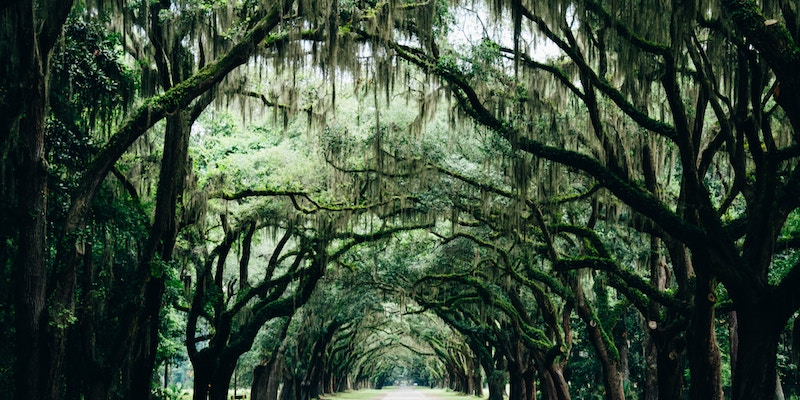 Where Southern Gothic Meets Crime - Lori Roy Recommends 8 Southern Gothic Mysteries