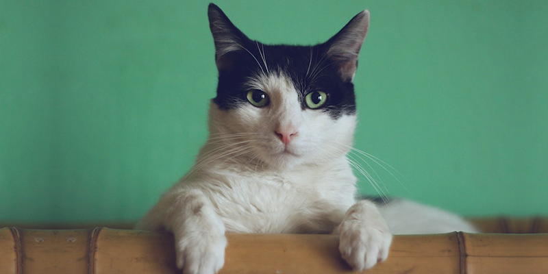 cat-cozies-feat.jpg